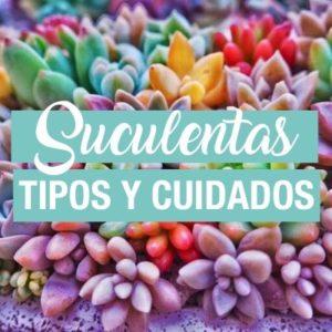 Plantas suculentas: información para conocerlas y cuidarlas