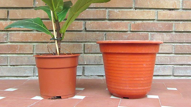 Una maceta pequeña con una planta y al lado una maceta más grande vacía lista para trasplantar