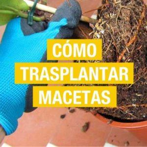 Cómo trasplantar plantas