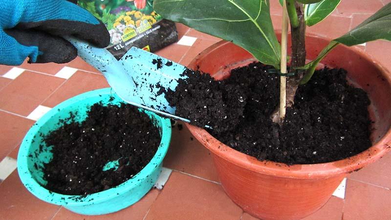 Cómo trasplantar una planta: una mano rellena una maceta con sustrato
