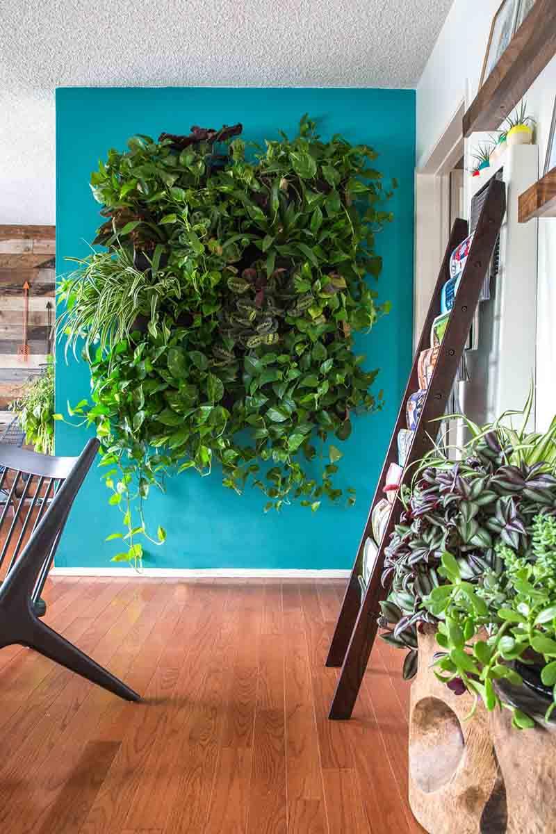 Una pared azul turquesa de un salón con un jardín vertical natural