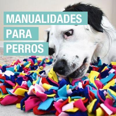 Manualidades para perros