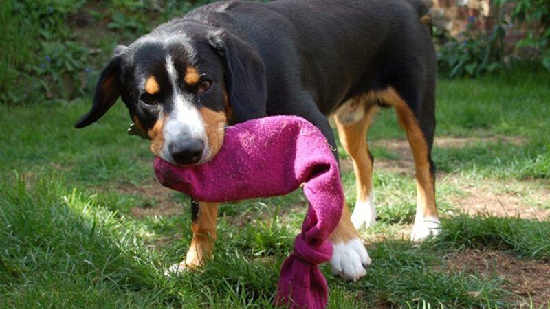 Manualidad: juguete con una botella y un calcetín