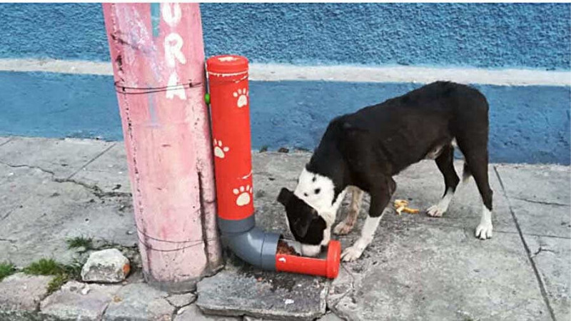 Comedero automático para perros