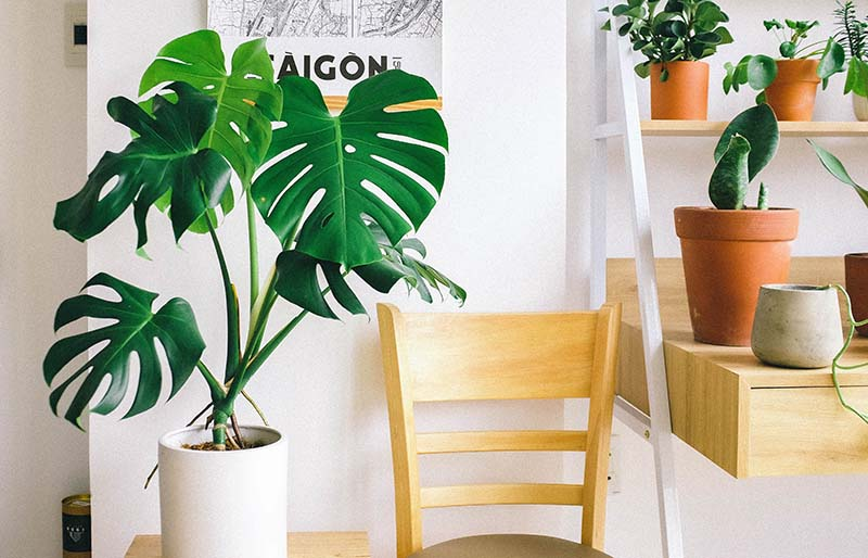 Una costilla de Adán decorando el interior de una casa junto a una silla de madera