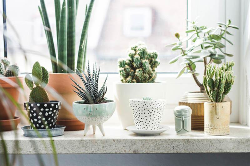 Una encimera delante de una ventana decorada con plantitas y macetas pequeñas