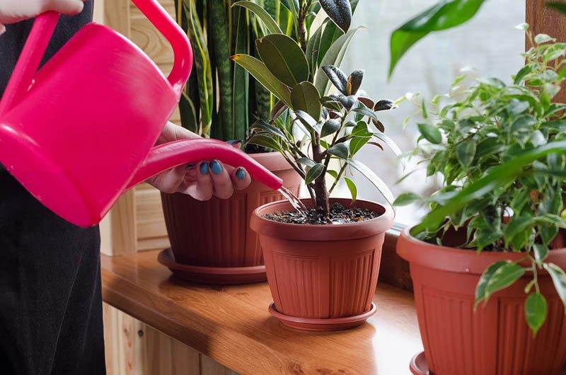 Regar las plantas al atardecer ayuda a enfriar la casa