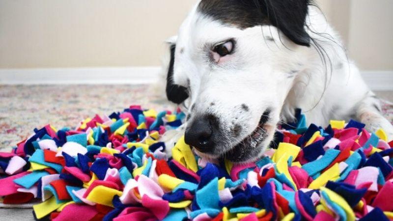 Trabajos de olfato para tu perro