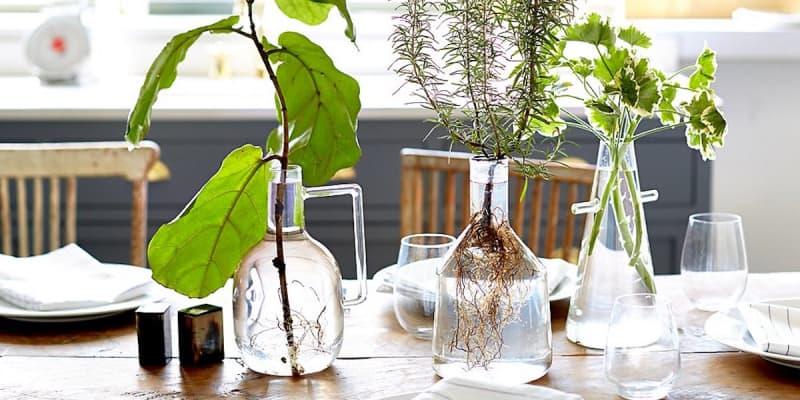 Cómo decorar con plantas de agua en jarrones transparentes
