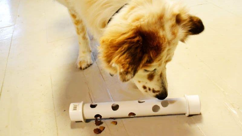 Juego con premios para perros con un tubo de PVC