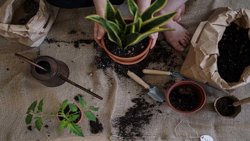 ¿Cuánto sabes sobre plantas? tipos y cuidados