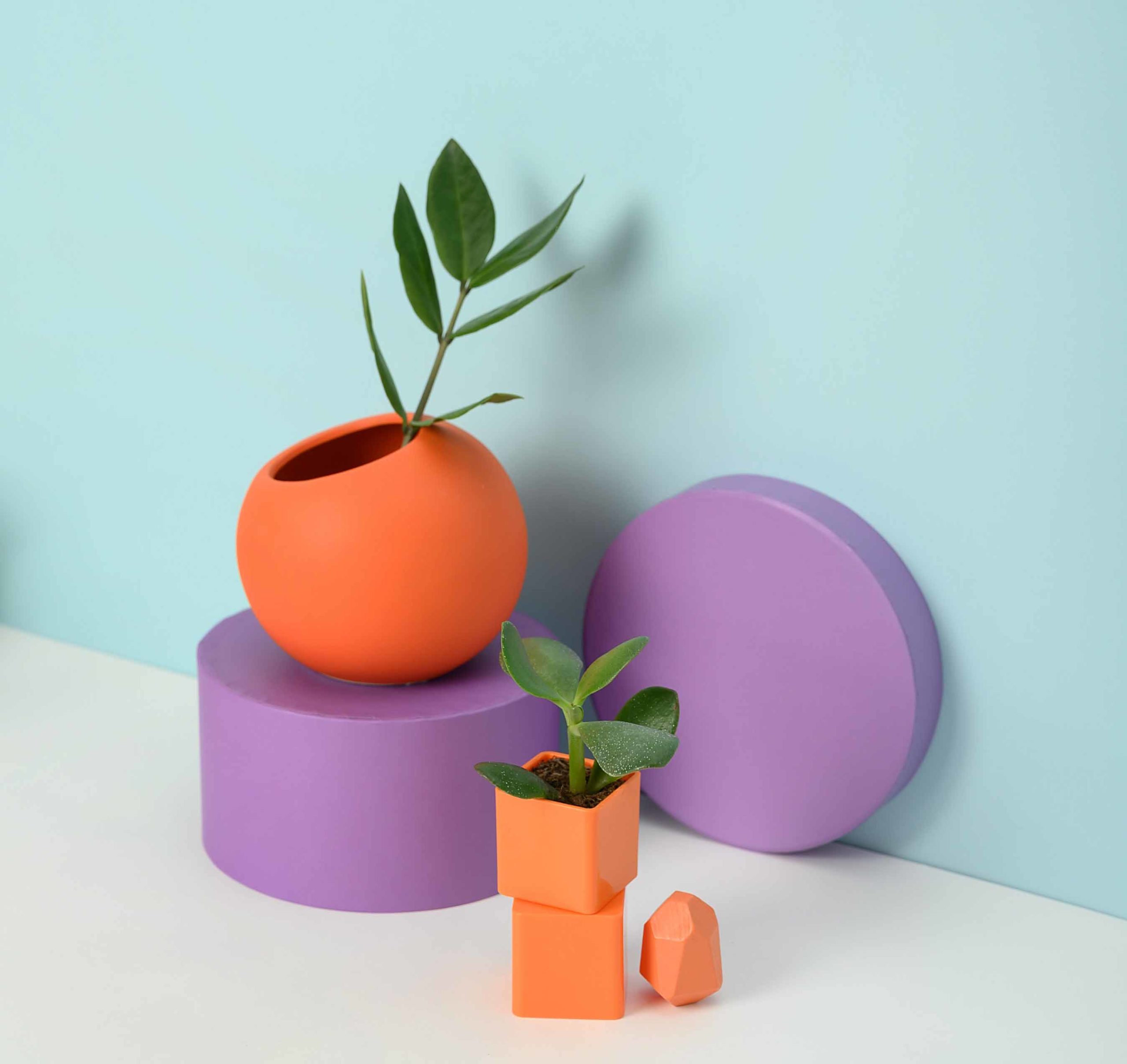 miniatura-quizz-plantas-tipos-características